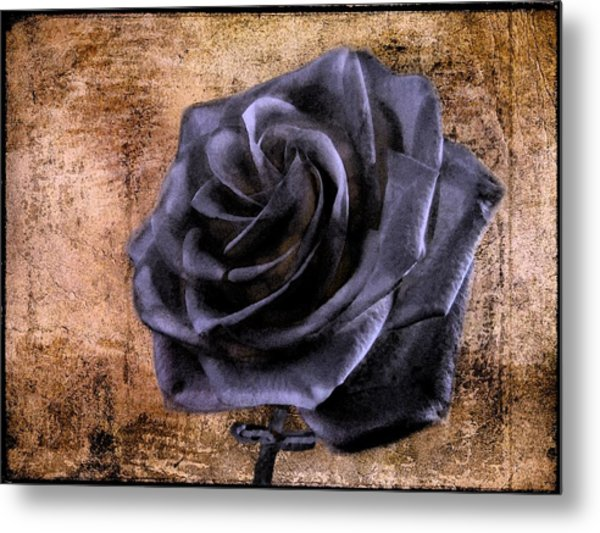 Black Rose Eternal   Metal Print