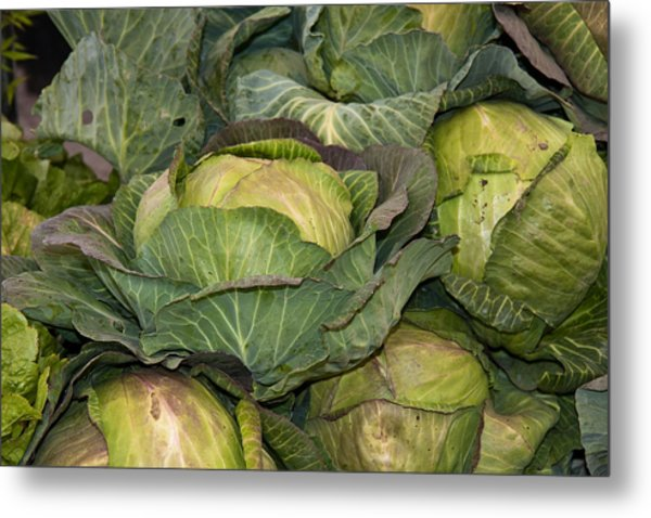Blooming Cabbage Heads Metal Print by Dina Calvarese