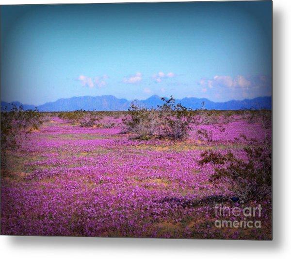 Blooming Desert Verbena Metal Print