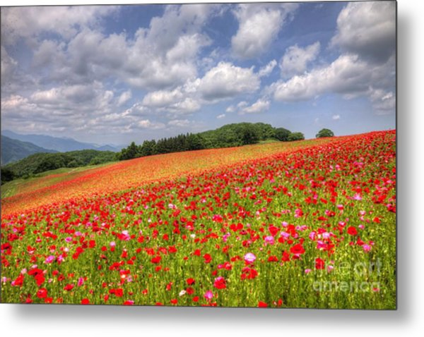 Blooming In The Plateau Metal Print by Tad Kanazaki