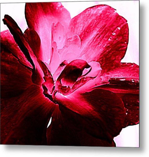 Blooming Pink Metal Print