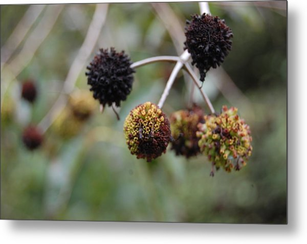 Blooms Metal Print by Beverly Hammond