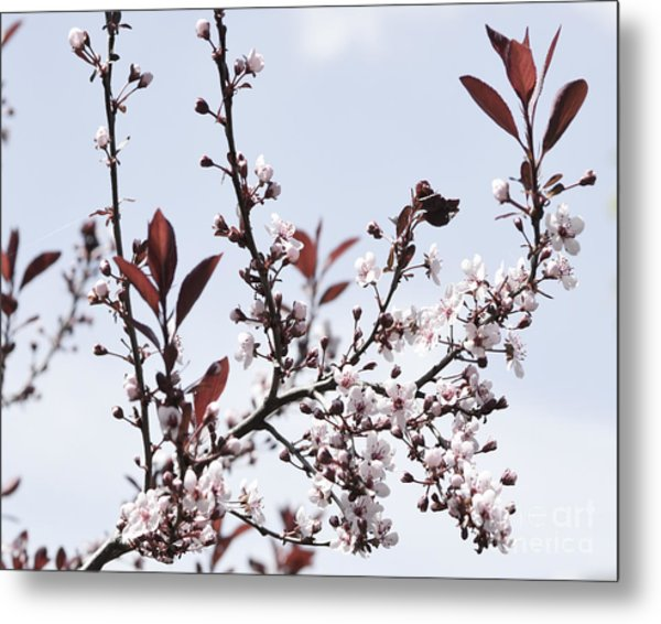 Blossoms In Time Metal Print