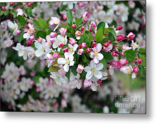 Blossoms On Blossoms Metal Print
