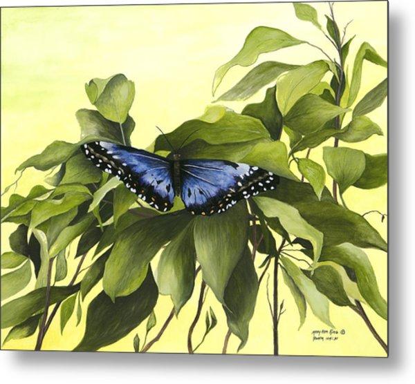 Blue Butterfly Of Branson Metal Print