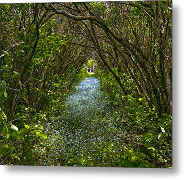 Blue Carpet In The Woods. Metal Print
