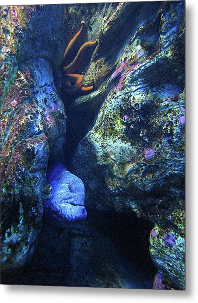 Blue Eel And Shy Friend Metal Print