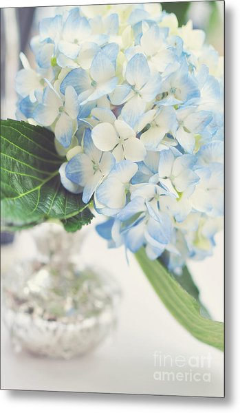 Blue Hydrangea Metal Print by Tamara Adams