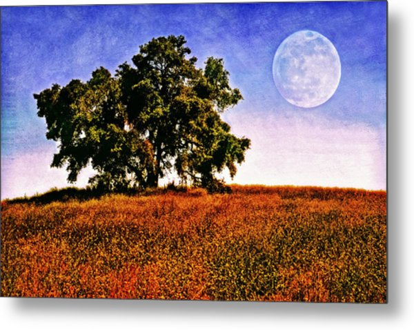 Blue Moon Morning Metal Print by Donna Pagakis