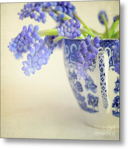 Blue Muscari Flowers In Blue And White China Cup Metal Print