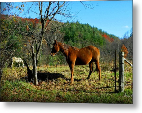 Blue Ridge Mountain Horses Metal Print