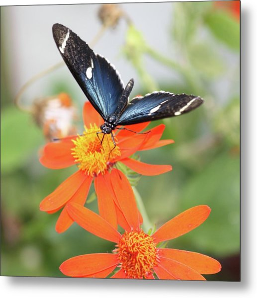 Blue Sara On Orange Sunflower Metal Print by Andrea  OConnell