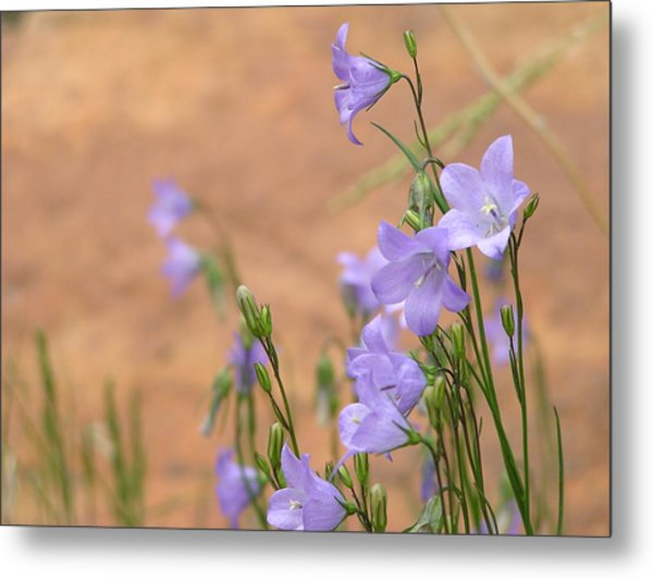 Bluebells And Red Rock Metal Print