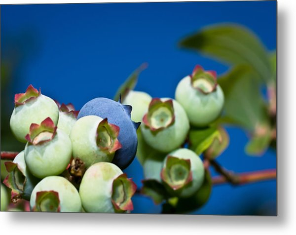 Blueberries And Sky Metal Print