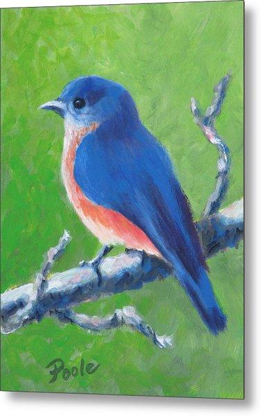 Bluebird In Spring Metal Print