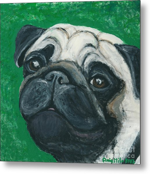 Bo The Pug Metal Print