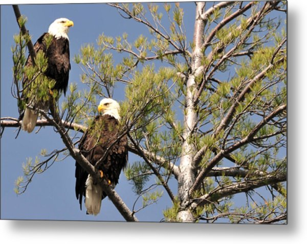 Bor River Eagles Metal Print