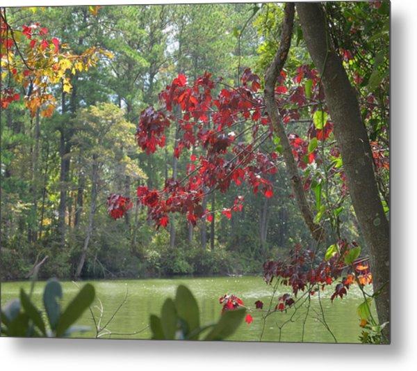 Botanical Garden Waterway Metal Print