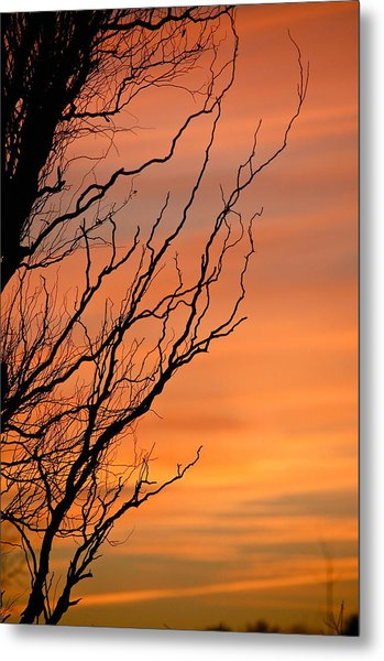 Branches Meandering Through The Sunset Metal Print