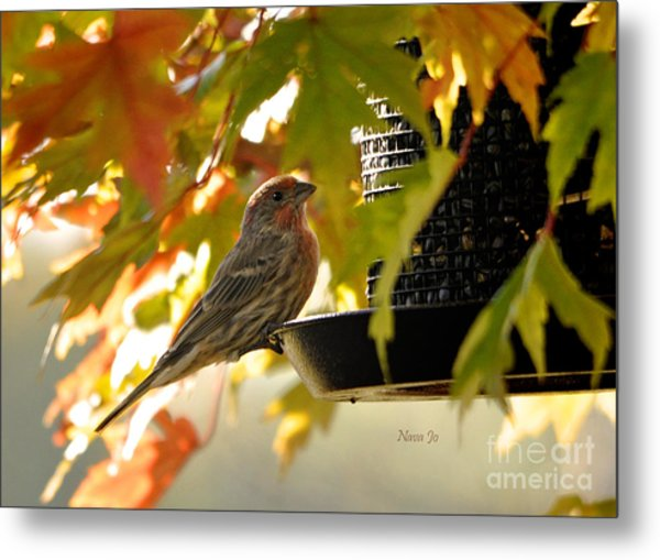 Breakfast With A View Metal Print by Nava Thompson