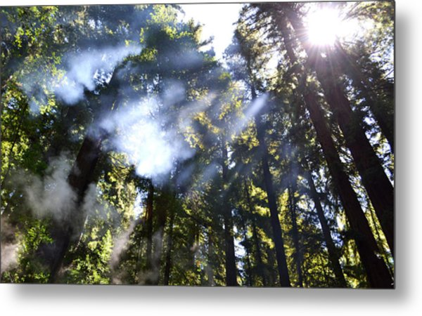 Breaking Through The Trees Metal Print
