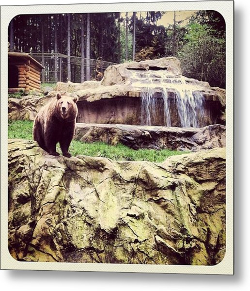 Bärig... #bär #bear #waterfall #epic Metal Print