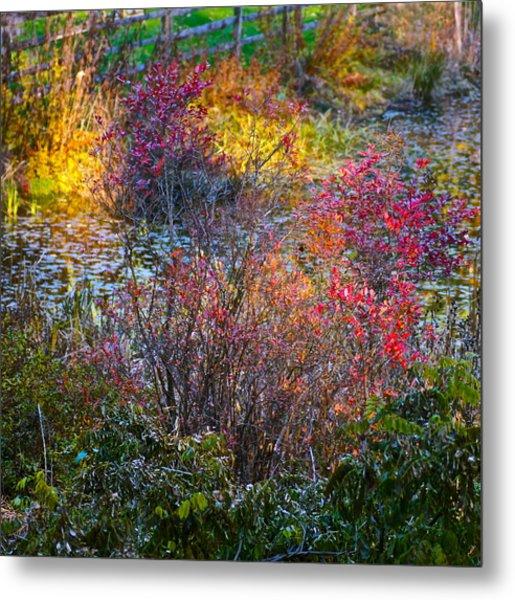 Bright Autumn Light Metal Print