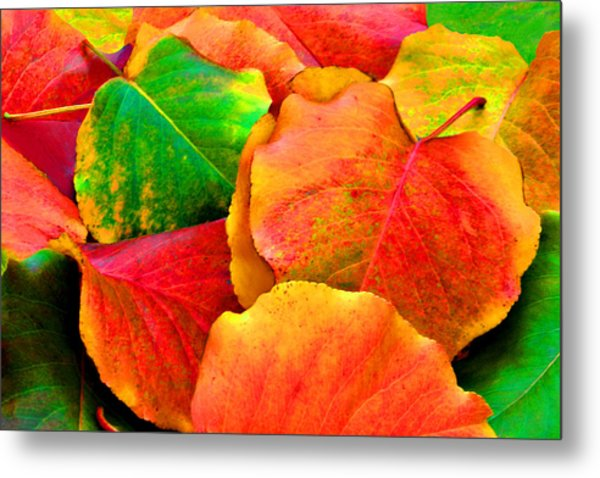 Bright Beautiful Fall Leaves Metal Print