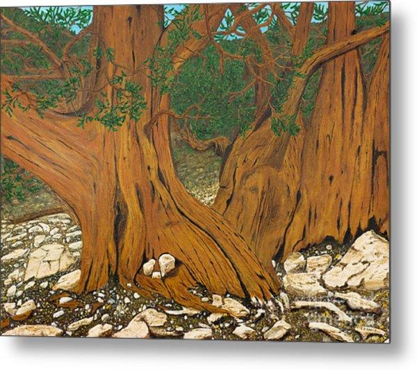 Bristlecone Pine Metal Print