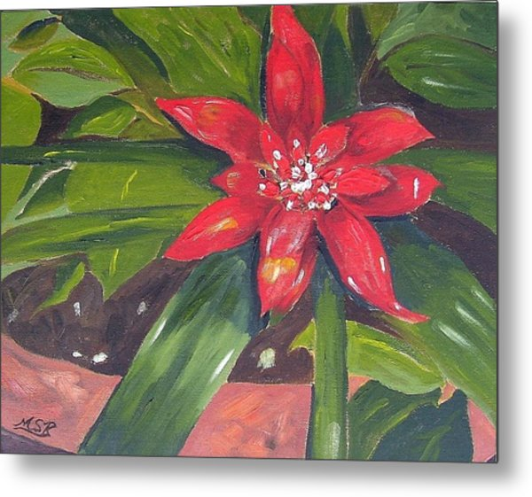 Bromeliad Bloom Metal Print by Maria Soto Robbins