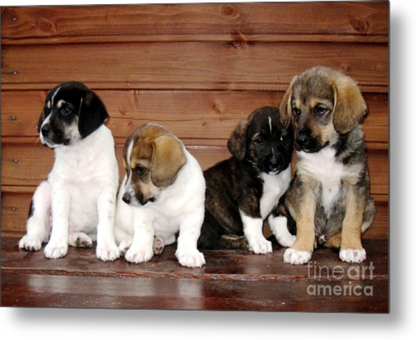 Brothers Puppies Metal Print