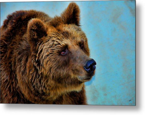 Brown Bear 203 Metal Print