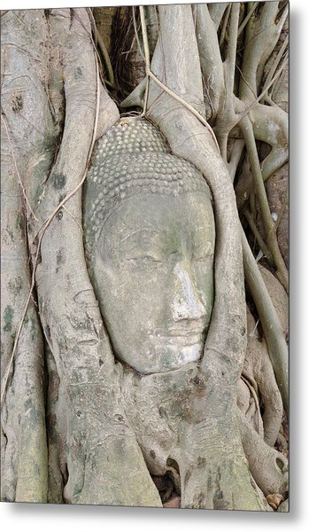 Buddha Head In A Tree Metal Print by Kanoksak Detboon
