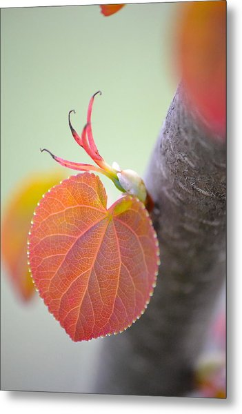 Budding Heart Metal Print