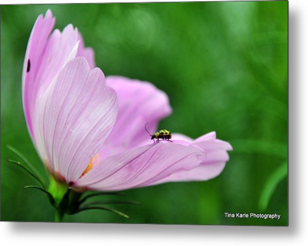 Bug On Flower Tip Metal Print by Tina Karle