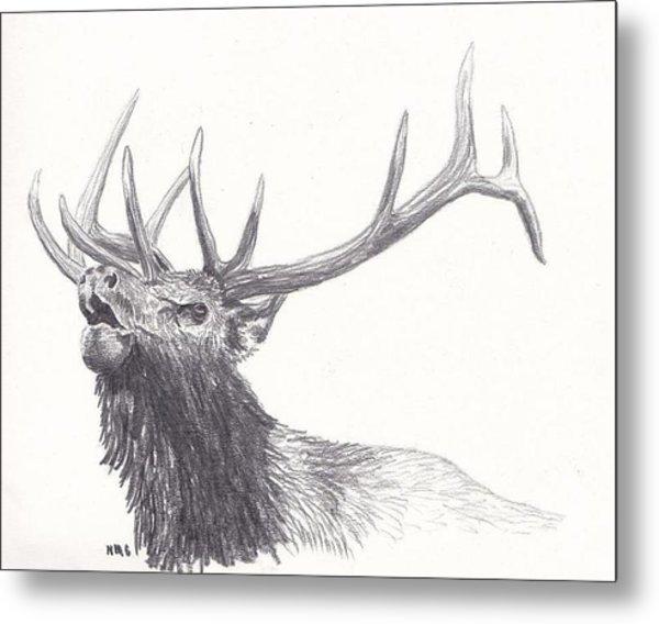 Bull Elk Metal Print by Nicole Grattan