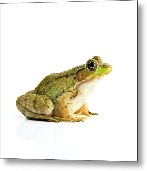 Bull Frog Photograph by Richard Upshur