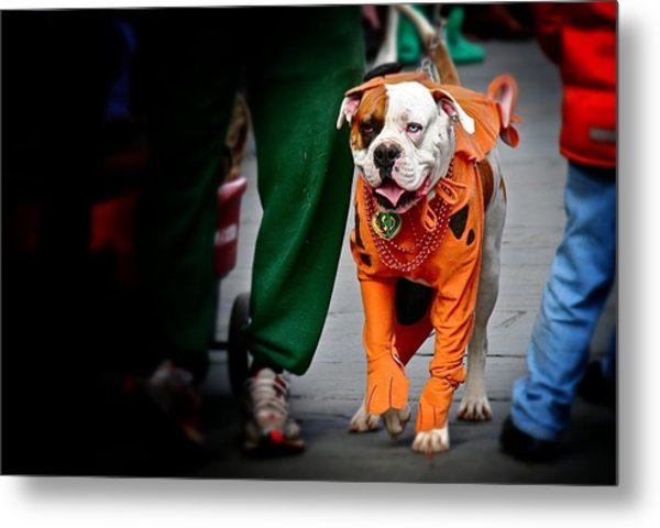 Bulldog In Orange Costume Metal Print
