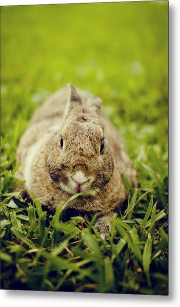 Bunny Facing Camera Metal Print