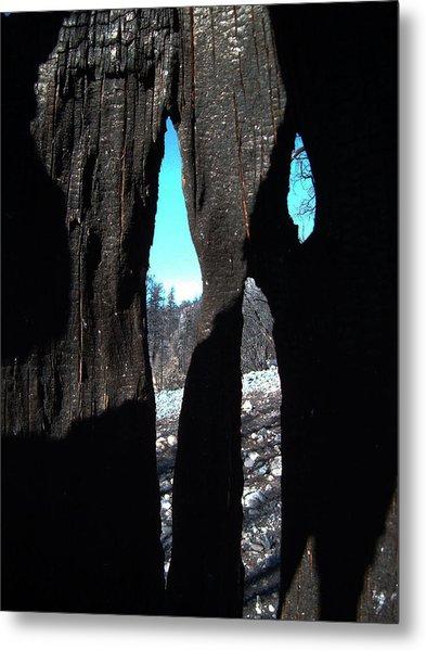 Burned Trees 10 Metal Print