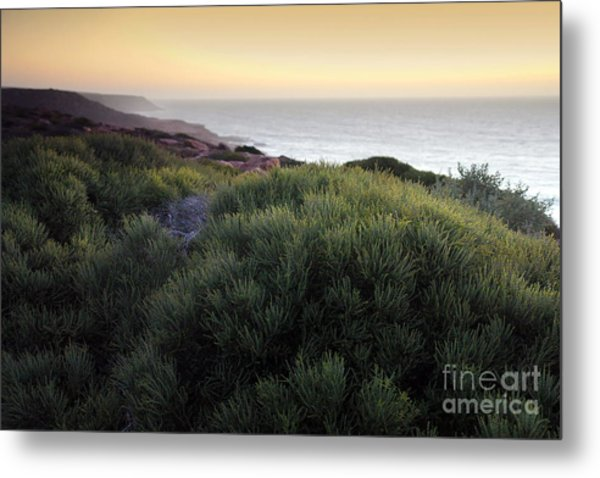 Bush At Twilight Metal Print by Roberto Bettacchi