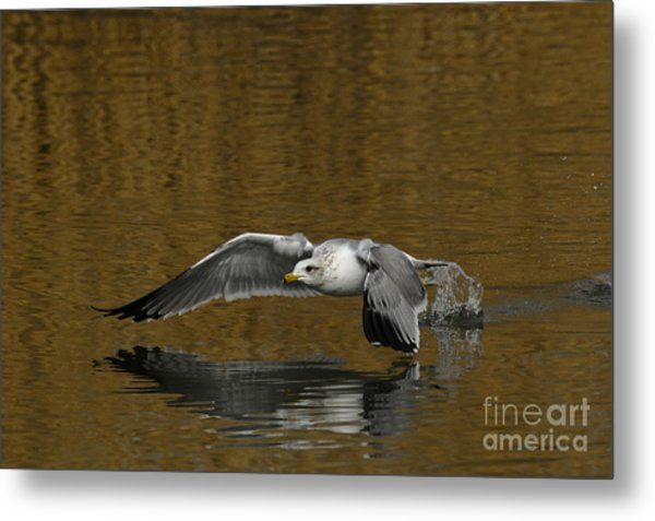 Busting A Move Metal Print by Dennis Hammer