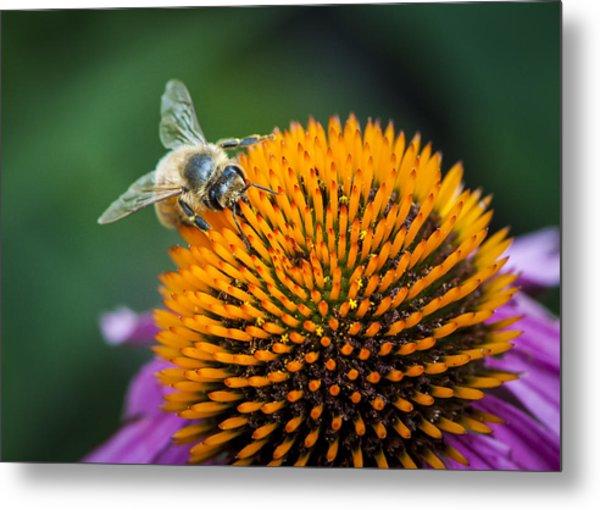 Busy Bee Metal Print by Jen Morrison