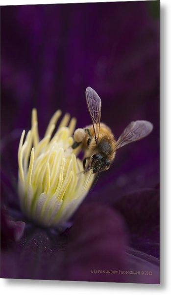 Busy Bee Metal Print by Kelvin Andow