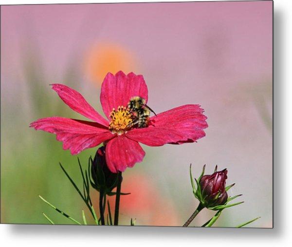 Busy Bee Metal Print by Ronald Lafleur