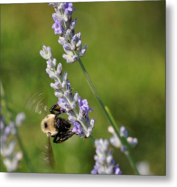 Busy Bee Metal Print by Terri Albertson