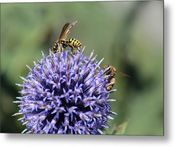 Busy Bees Metal Print by Janet Mcconnell