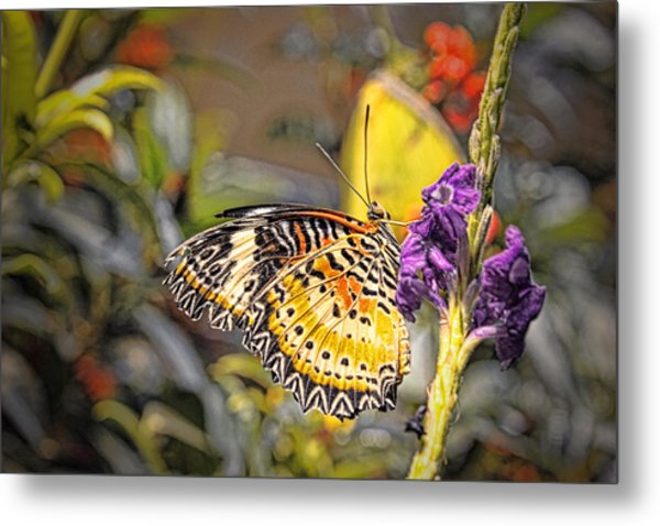 Butterfly 3 Metal Print by Nathan Firebaugh