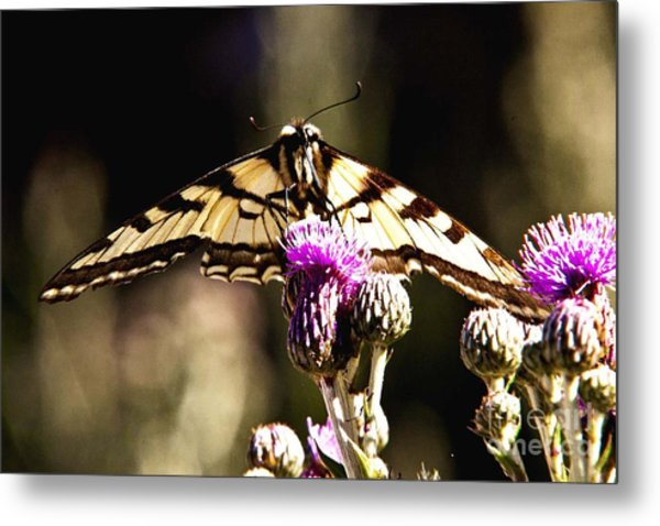 Butterfly And Thistle Metal Print