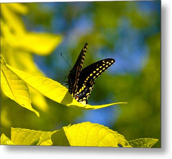 Butterfly Beauty Metal Print by Erica McLellan